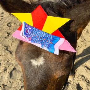 乗馬担当のウマたちが『こどもの日』をお祝いします!
