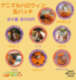 アニマルハロウィン缶バッチ POP2_edited.jpg