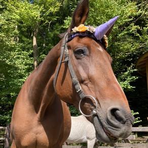 乗馬ウマのクレアちゃんがお引っ越しします