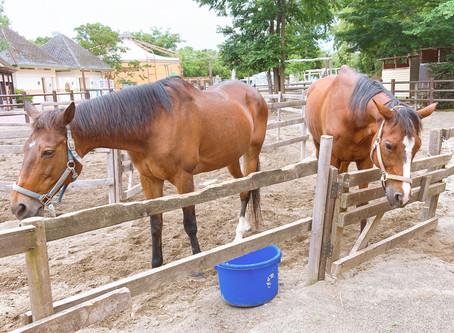 乗馬の営業について(7月6日更新)