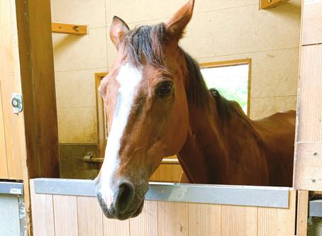 乗馬ウマのサンターノ君がお引っ越しします(7月12日再更新)