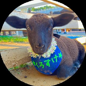 子羊イベント5.png