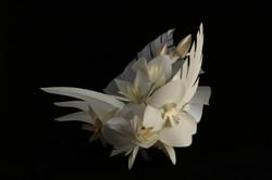 Fleurs en clair-obscur