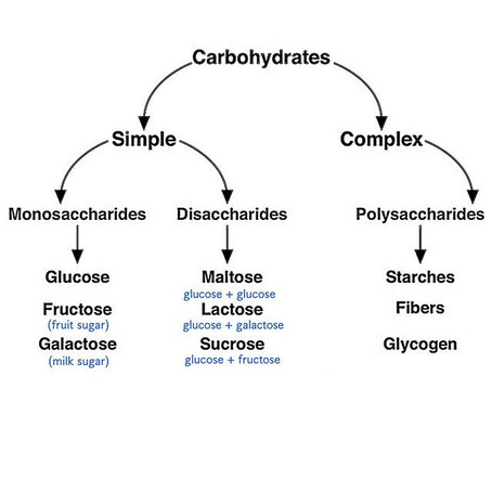 Carb Absorption & Utilization During Exercise