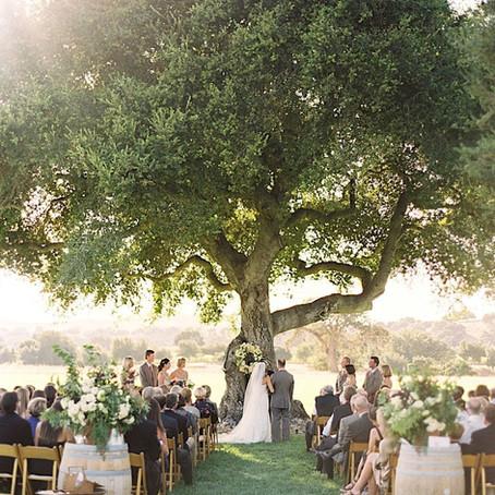 Le Chêne de l'Époux