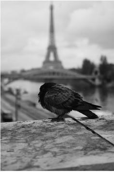 PARIS155