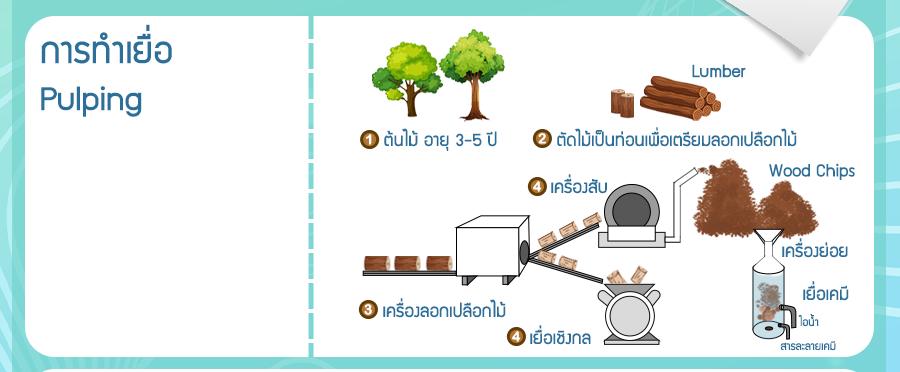 เยื่อกระดาษสามารถพบได้ในต้นไม้ ซึ่งต้นไม้ที่นิยมนำทำจะมีอายุ 3-5 ปี โดยในอดีตต้นไม้ที่นำมาผลิตกระดาษมักจะถูกตัดมาจากในป่า แต่ในปัจจุบันต้นไม้ที่นิยมนำใช้จะเป็นต้นกระดาษ (เป็นต้นไม้ที่ปรับแต่งพันธุกรรมมาจากต้นยูคาลิปตัส) ซึ่งเป็นต้นเดียวกันกับที่เกษตรกรปลูกไว้ตามคันนานั่นเอง หลังจากตัดต้นไม้เหล่านั้นมาแล้ว ก็จะนำมากะเทาะเปลือก เพื่อนำไปผลิตเป็นเยื่อกระดาษต่อไป โดยเยื่อกระดาษสามารถแบ่งได้ 3 ประเภท ได้แก่ เยื่อกระดาษเชิงกลหรือเยื่อบด (Mechanical Pulp), เยื่อกระดาษเคมี (Chemical Pulp), เยื่อกระดาษกึ่งเคมี (Semi-chemical Pulp)