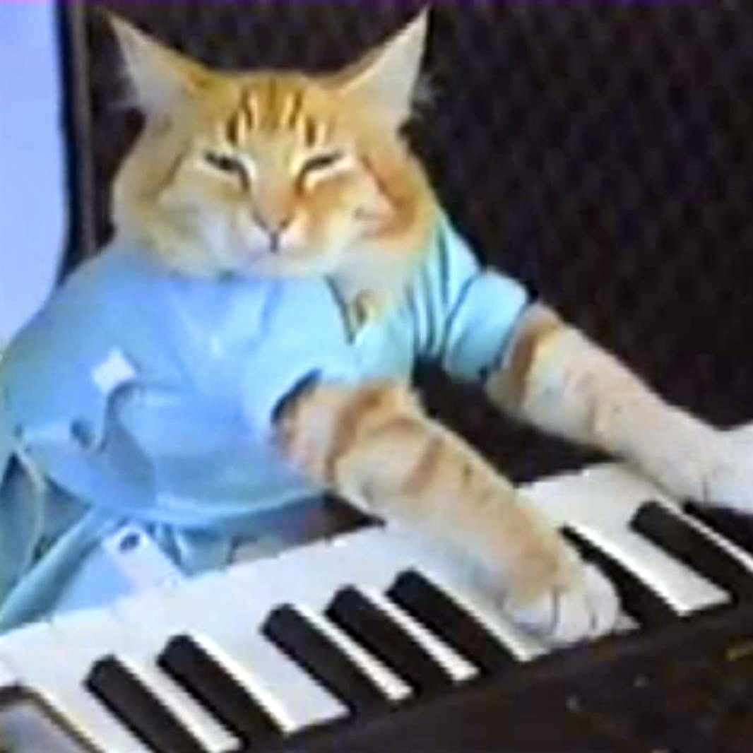 Inspiration photo, keyboard cat