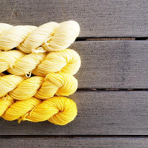 Honey Mustard Fade - set of 4 mini sock weight superwash wool skeins