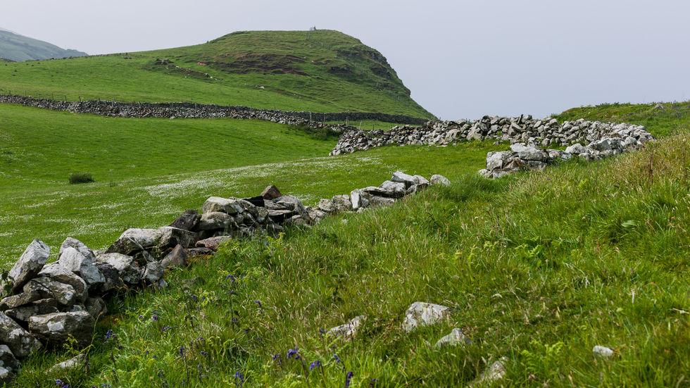Irish stone walls.jpg