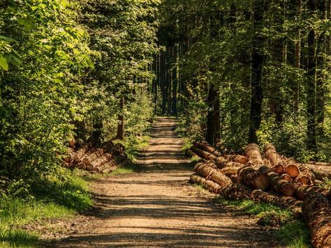 Ranger Führung im Teutoburger Wald