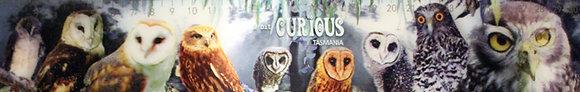 A Bit Curious Owl Ruler
