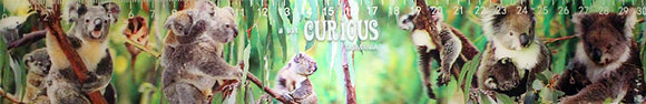 A Bit Curious Koala Lenticular Ruler