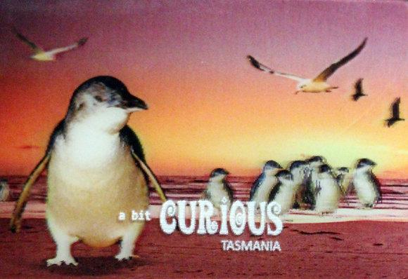 A Bit Curious Penguins at Sunset Magnet