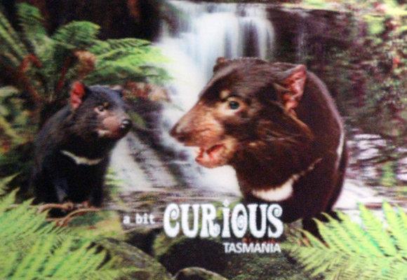 A Bit Curious Tasmanian Devil Lenticular Magnet