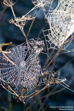 Glitzernde Spinnen-Netz