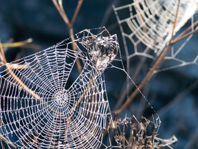 The Arachne Principle