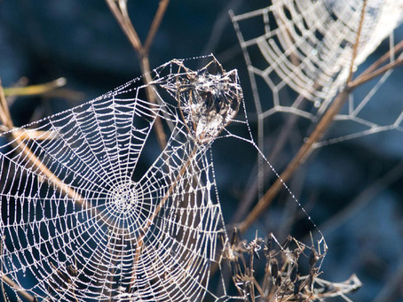 Why Cobwebs Might Be Worth the Investment