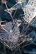 Phobie araignée Hypnotherapeute Chartres Hypnose Hypnotiseur