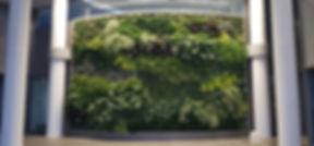 living wall_edited_edited.jpg