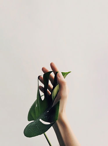 photo-of-person-holding-green-leaf-10298