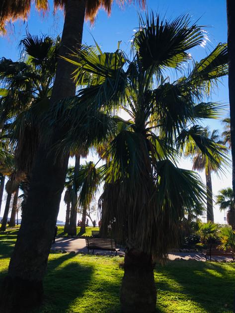 Palm Beach à Cannes