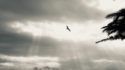 Fly high_MAH
