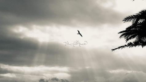 Bird in glory_MAH