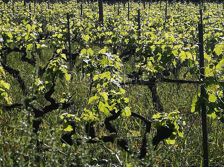Life is a vineyard_MAH