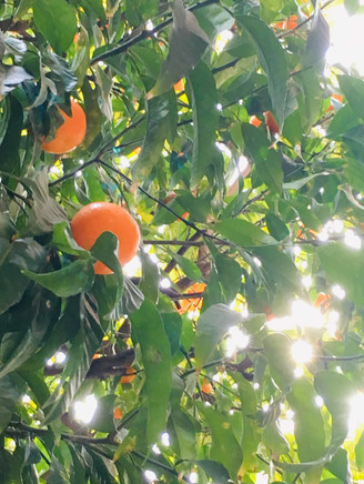 Fruits au soleil