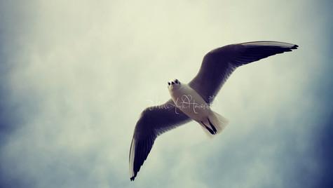 Free as a bird_MAH