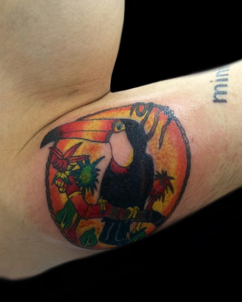 オオハシ 鳥 | COLOR