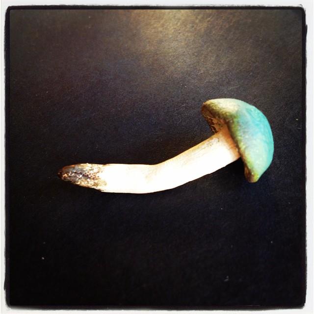 Instagram - #mushroom #fairyland