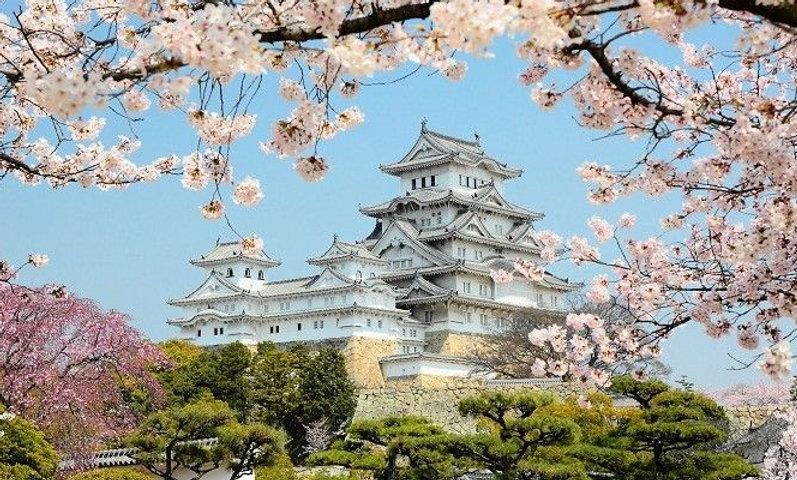 Цветение сакуры в апреле