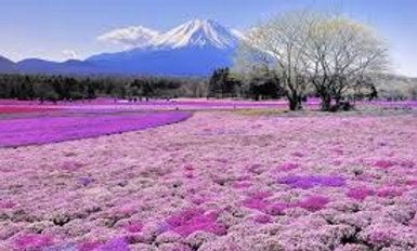 ЯПОНИЯ: Майские грёзы о Японии