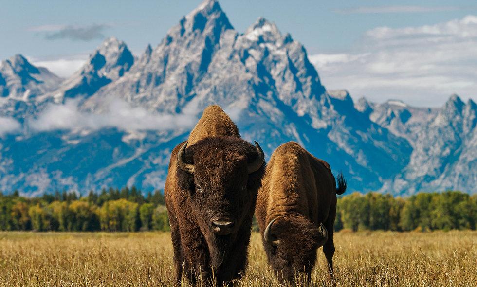 Mt Rushmore, Grand Tetons & Yellowstone