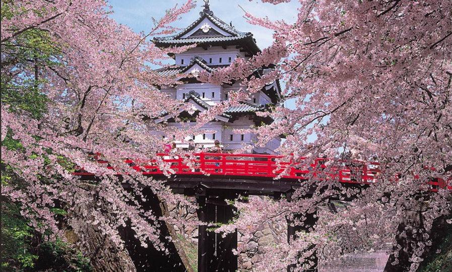 ЯПОНИЯ:  Лепестки  сакуры