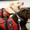 Service Dog Acquisition