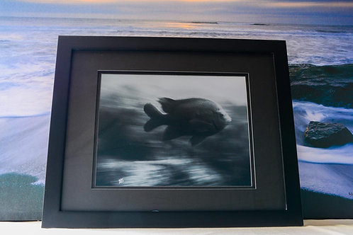 Contemporary 10x13 Framed Ocean Décor of Garibaldi