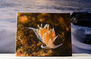 underwater gallery wrapped canvas art