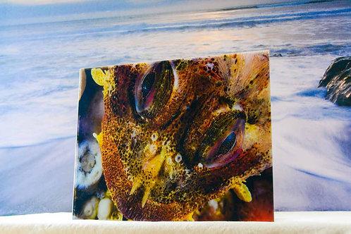 Acrylic 8x10 Fine Ocean Art of Irish Lord Fish