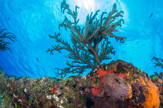 Looking Up at A Cozumel Reef