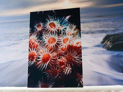 Underwater 8x12 Metal Art of Zoanthid Anemone