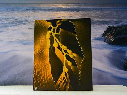 8x10 Metal Ocean Wall Art of California Giant Kelp