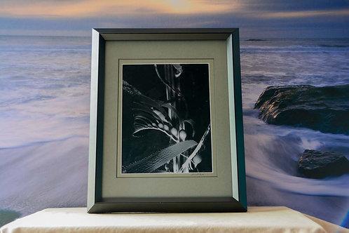 Framed 11x14 Black & White Print of Giant Kelp Contemporary Ocean Home Décor