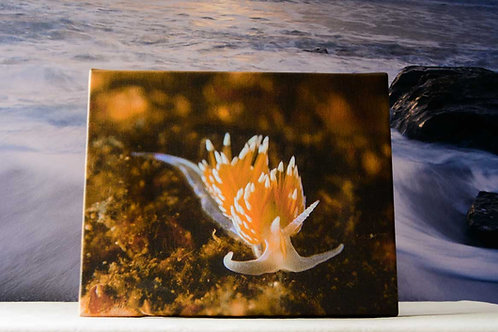 Gallery-Wrapped 8x10 Canvas of Nudibranch