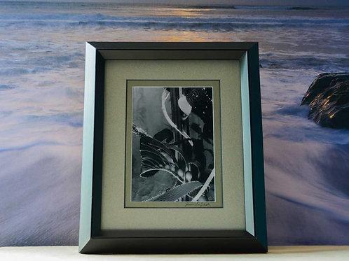 Framed 8x10 Artistic Black & White Print of Giant Kelp Ocean Home Décor