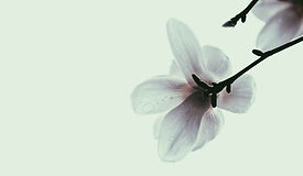 Karianne_Kraaijestein_Online-Meditation.