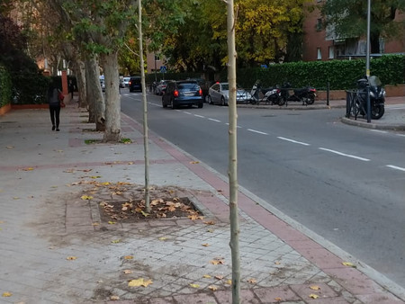 El patrimonio arbóreo madrileño se amplía con 7.500 nuevos ejemplares