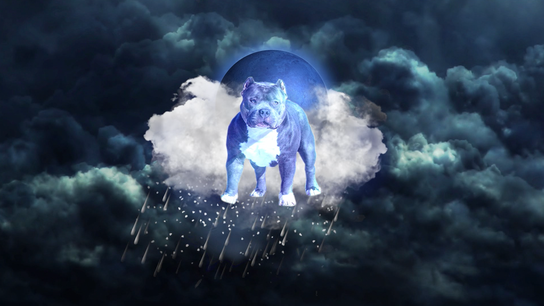 Raiden the Thunder Dog